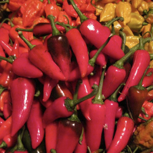 Red Hawk Premium Peppers